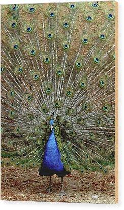 Wood Print featuring the photograph  Iridescent Blue-green Plumage by LeeAnn McLaneGoetz McLaneGoetzStudioLLCcom