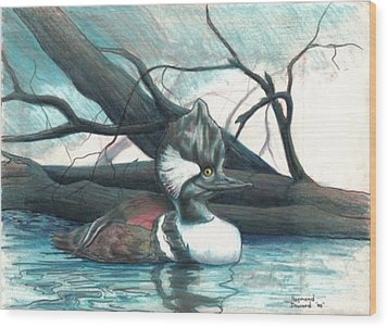 Merganser Duck Wood Print by Raymond Doward