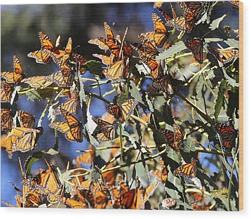 Monarch Cluster Wood Print
