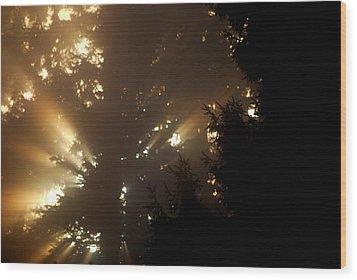 Morning Wood Print by Sergey  Nassyrov