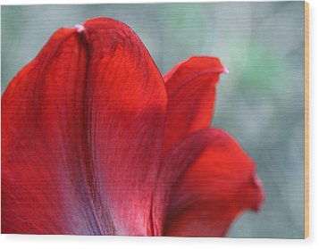 Mprints - Perfect Petal Wood Print by M  Stuart