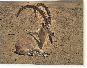 Nubian Ibex Wood Print by Alexander Rozinov