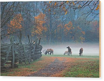 Oconaluftee Visitor Center Elk Wood Print