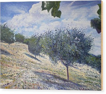 Olive Grove At Monte Cardeto Lazio Italy 2009  Wood Print by Enver Larney