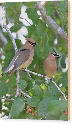 Pair Of Cedar Waxwings Wood Print by Kathy Gibbons