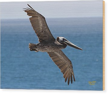 Pelican Flying Wings Outstretched Wood Print
