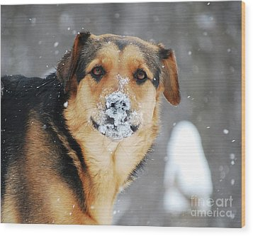 Wood Print featuring the photograph  Snow Smile  by Lila Fisher-Wenzel