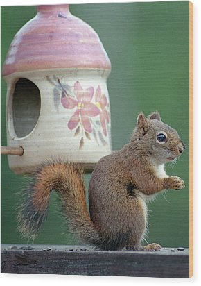 Squirrel Chatter Wood Print