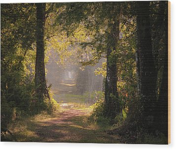 Swamp Trail Wood Print