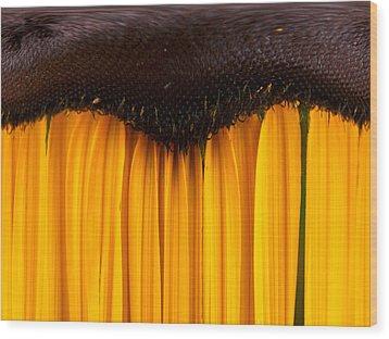 The Curtains Wood Print by Jouko Lehto