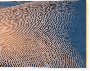 Tracks At First Light In Death Valley Wood Print by Sandra Bronstein