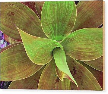 Translucense Wood Print