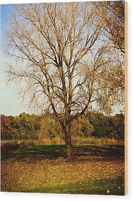 Wisdom Tree Wood Print by Kyle West