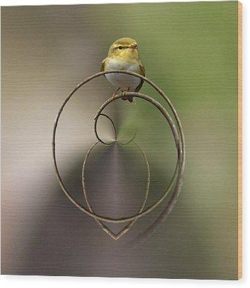 Wood Warbler Wood Print