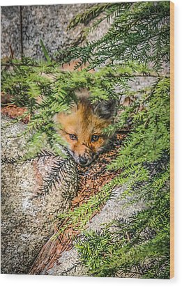 #0527 - Fox Kit Wood Print
