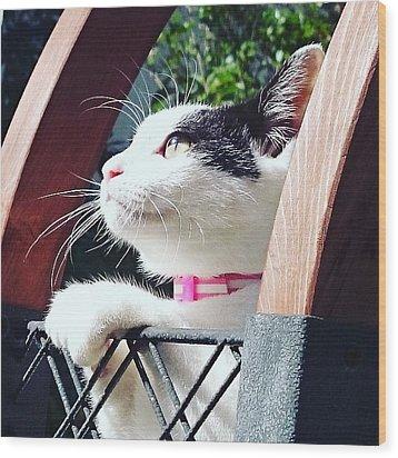 Koneko Means A Kitten Wood Print