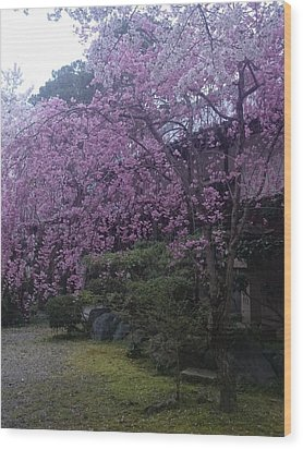 Shidarezakura Mean A Drooping Cherry Tree  Wood Print
