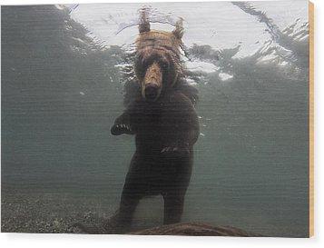 A Brown Bear Fishing For Salmon Wood Print by Randy Olson