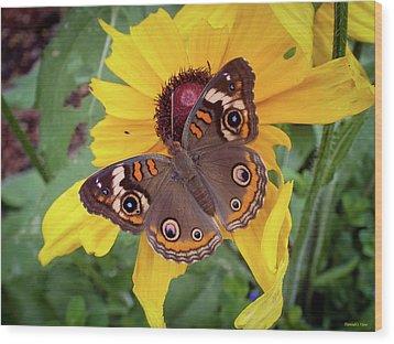 A Common Buckeye  Wood Print