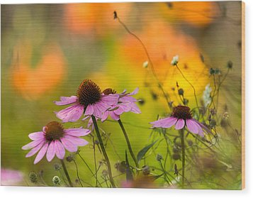 Wood Print featuring the photograph Coneflower Symphony by Mary Amerman