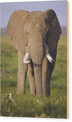 African Elephant Loxodonta Africana Wood Print by Gerry Ellis
