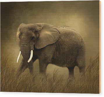 African Elephant Wood Print by TnBackroadsPhotos