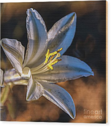 Wood Print featuring the photograph Ajo Lily by Robert Bales