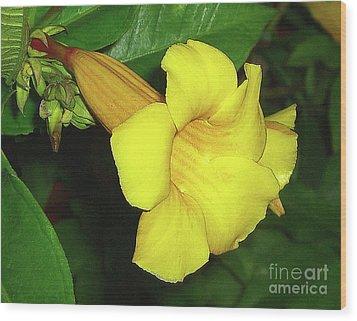 Wood Print featuring the photograph Alamanda Blossom by Merton Allen