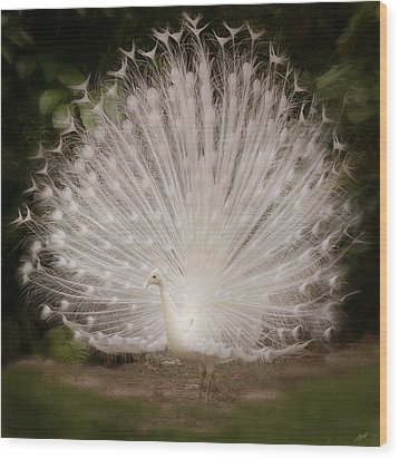 Albino Peacock  Wood Print by Joseph G Holland