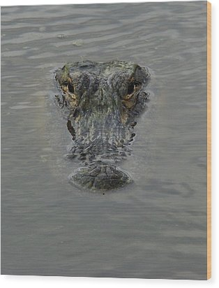 Alligator One Wood Print