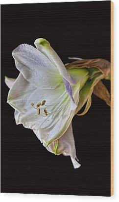 Amaryllis Wood Print by Robert Ullmann