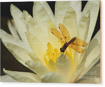 Amber Dragonfly Dancer 2 Wood Print