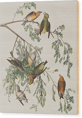 American Crossbill Wood Print by John James Audubon