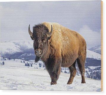 American Legend Wood Print