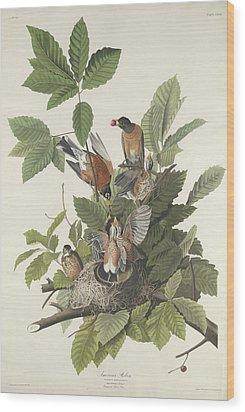 American Robin Wood Print by Rob Dreyer