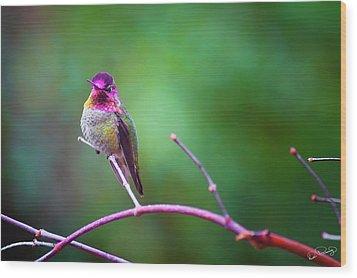 Anna Hummingbird Vii Wood Print