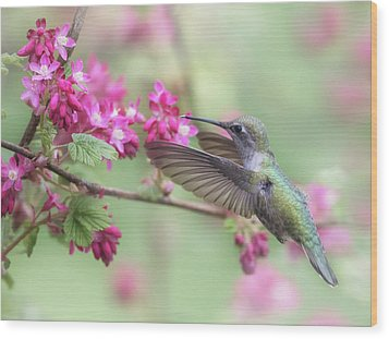 Wood Print featuring the photograph Anna In Spring by Angie Vogel