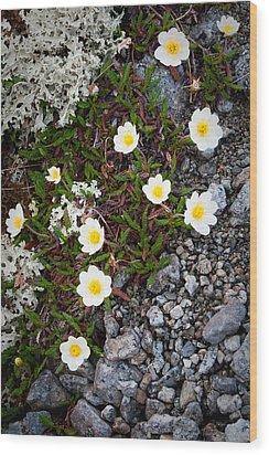 Arctic Flowers Wood Print by Konstantin Dikovsky