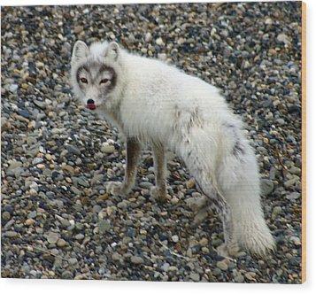 Arctic Fox Wood Print by Anthony Jones