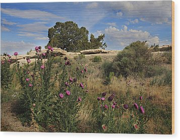 Wood Print featuring the photograph Arizona Desert by Joseph G Holland