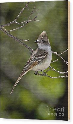 Ash-throated Flycatcher Wood Print by Anthony Mercieca