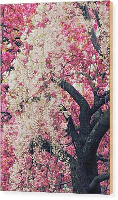 Asian Cherry Vignette Wood Print by Jessica Jenney