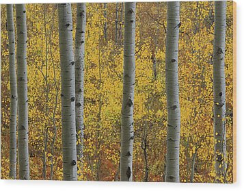 Wood Print featuring the photograph Aspen In Autumn At Mcclure Pass by Jetson Nguyen