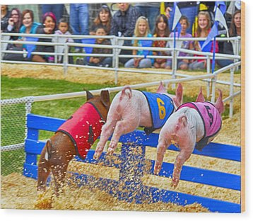 Wood Print featuring the photograph At The Pig Races by AJ Schibig