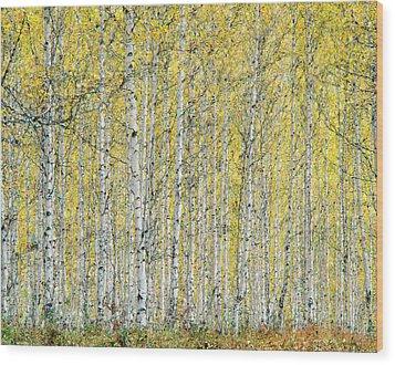 Wood Print featuring the photograph Autumn Landscape by Vladimir Kholostykh