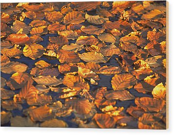 Autumn Leaves Wood Print by Michael Mogensen