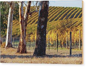 Autumn Vines Wood Print by Bill Robinson