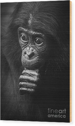 Wood Print featuring the photograph Baby Bonobo Portrait by Helga Koehrer-Wagner