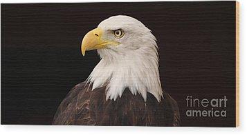 Bald Eagle Wood Print by David Warrington