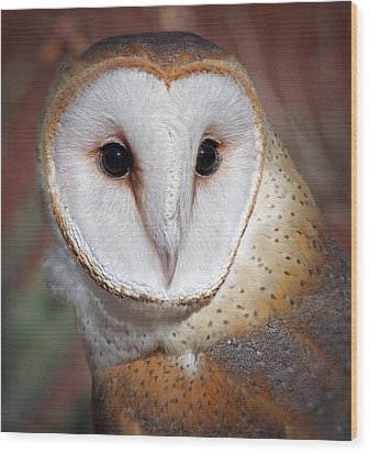 Barn Owl Wood Print by Elaine Malott